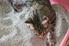 cat using a litter box