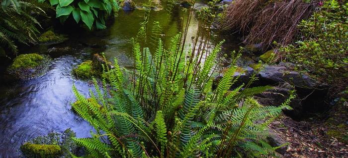 how to make a bog garden doityourselfcom - Bog Garden