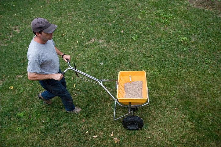 Мужчина оплодотворяет газон.