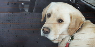Tips  on  Buying  an  Affordable  Used  Dog-Friendly  Vehicle