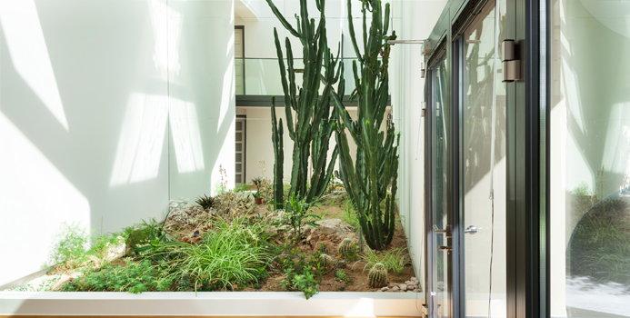 How To Grow An Indoor Vegetable Garden