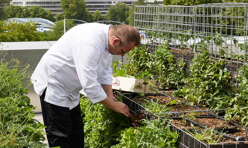 our chef Dimitri Szydywar in the Roof top market garden
