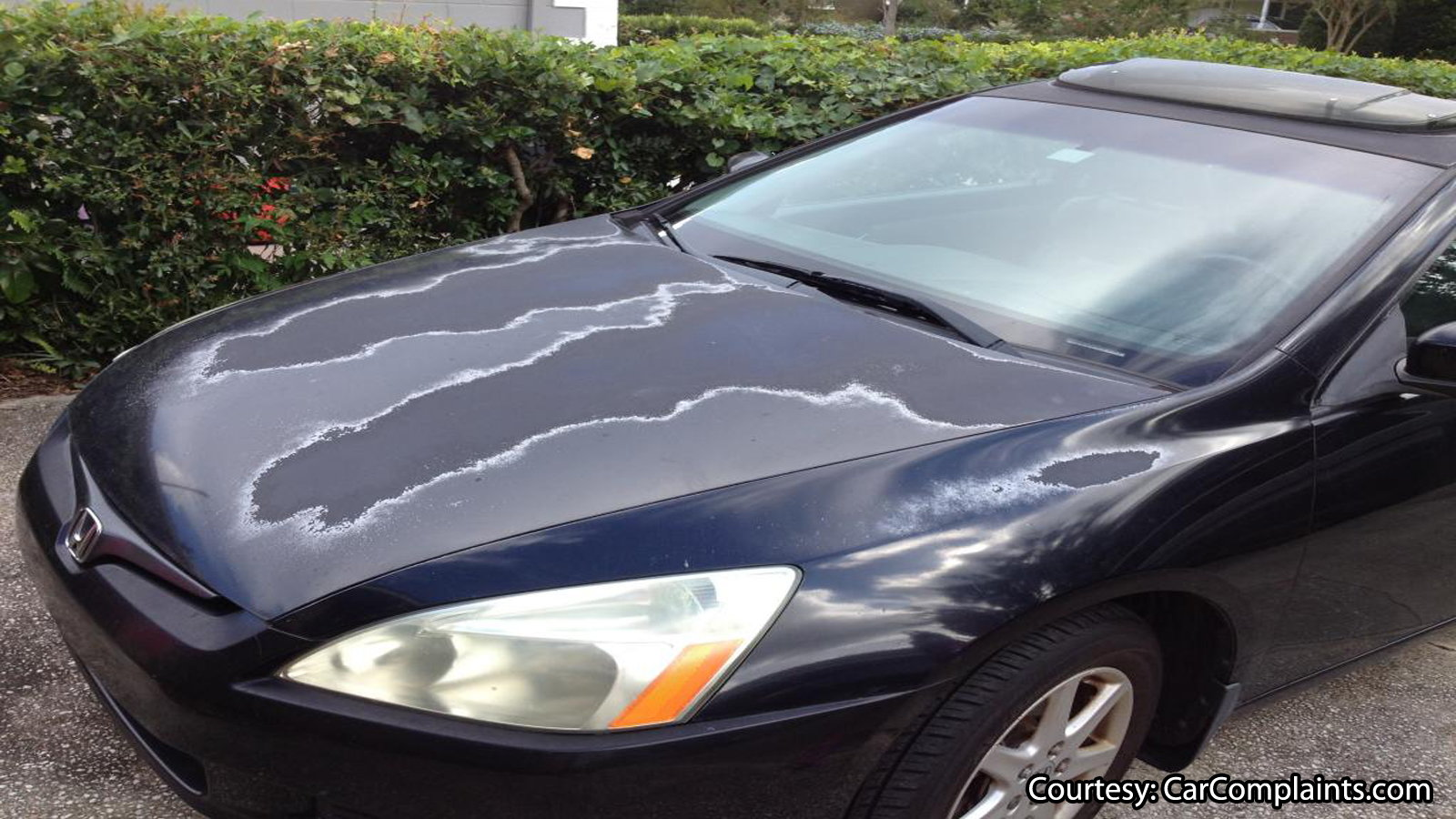 Keep the paint of your Honda looking new all the time.