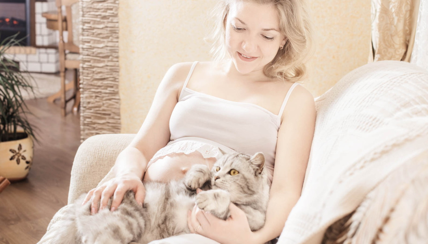 cat litter toxoplasmosis cat litter and pregnancy
