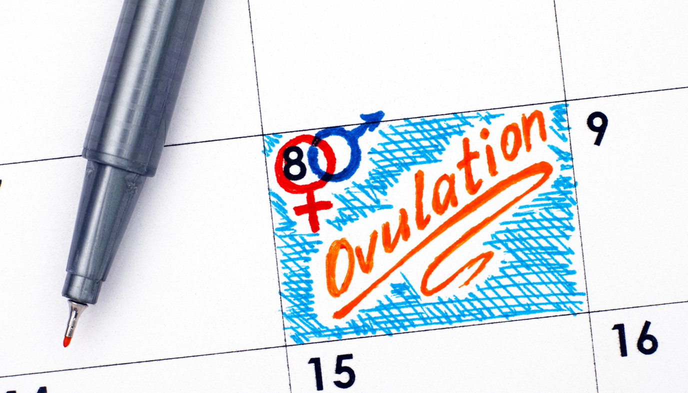 ovulation marked on a calendar
