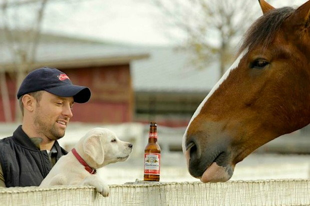 budweiser ad with dog held up by man as dog sniffs horse