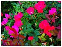 http://www.steves-digicams.com/camera-reviews/olympus/om-d-e-m10-mark-ii/P9180489.JPG