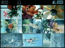 Canon EOS-1Ds Digital SLR