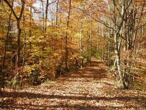 fall-walkway-500.jpg