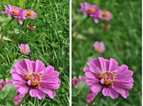 Image result for image focus and sharpness photography