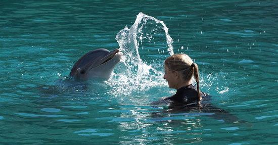 DolphinSpray.jpg