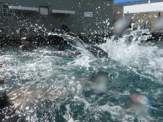 Dolphin_Splash.jpg