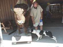 wall drug,,,,rex the wimp