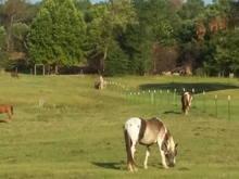 Bate's REAL Mustangs (actual just horses)