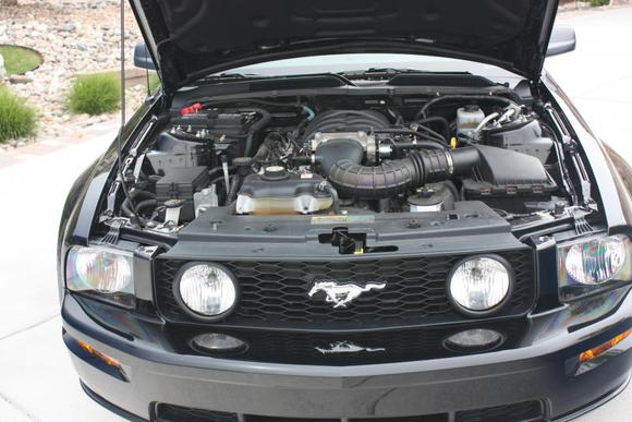 06 Mustang 6.11.09 013