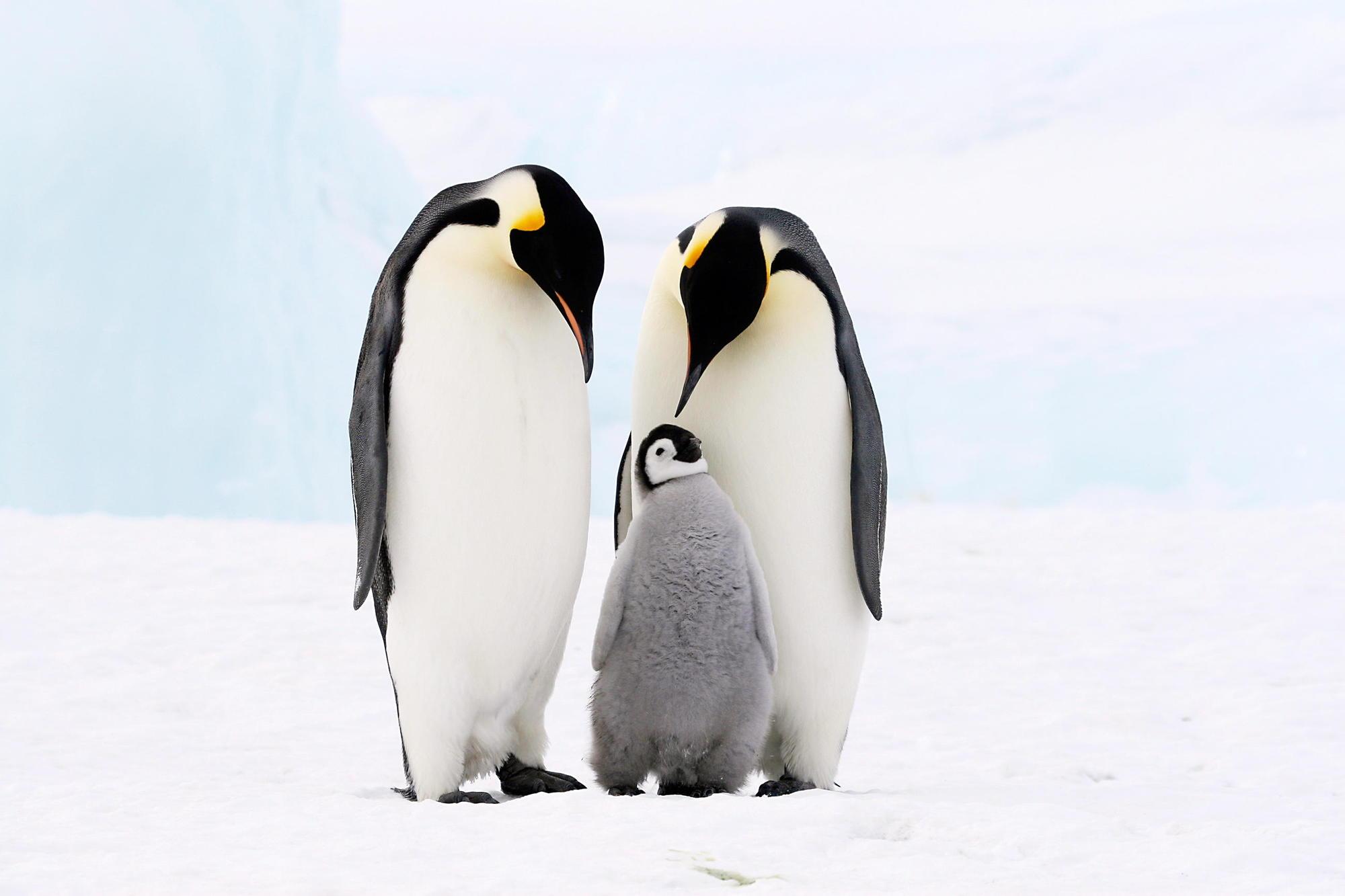 одной к чему снятся пингвины много на льдинах время