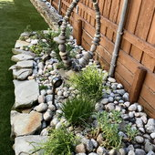 Succulent rock garden with Bulbine, fire sticks and a variety of gaptovera, hens and chicks and strawberries.