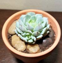 2/12/17, plant #2