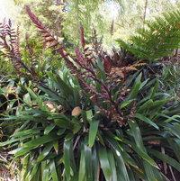 Bromeliad species...