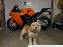 bailey and ktm