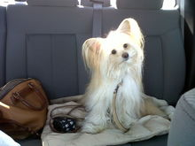 Scout (The pooches) in the back of the SuperCrew!