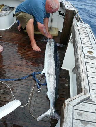 Shortbill Spearfish aka 'Chucka'