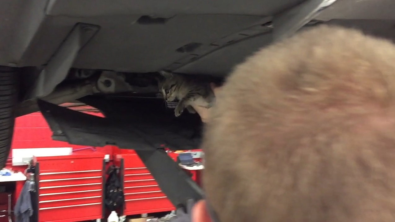 Rescuing a feral kitten from the motor compartment of a Tesla Model S electric car  [John Griswell]