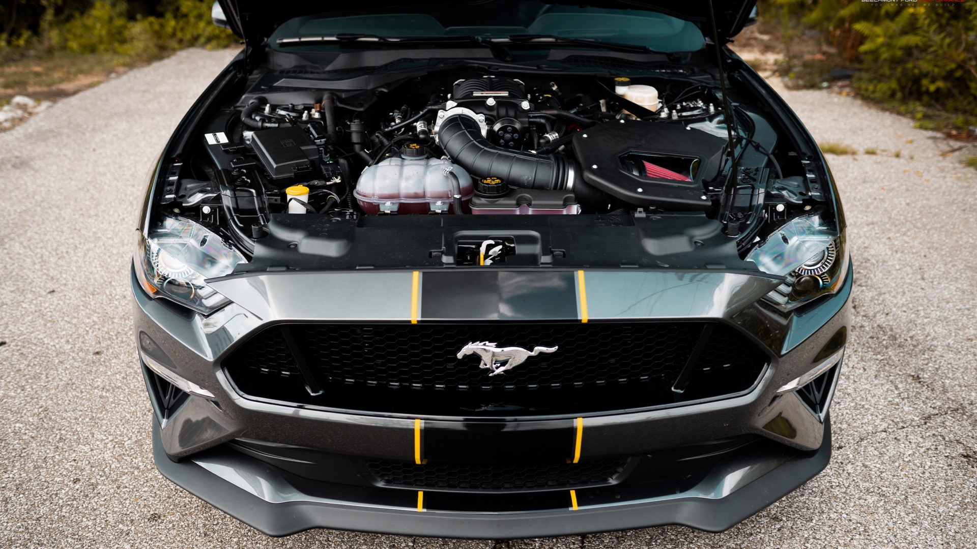 Beechmont Ford Mustang GT